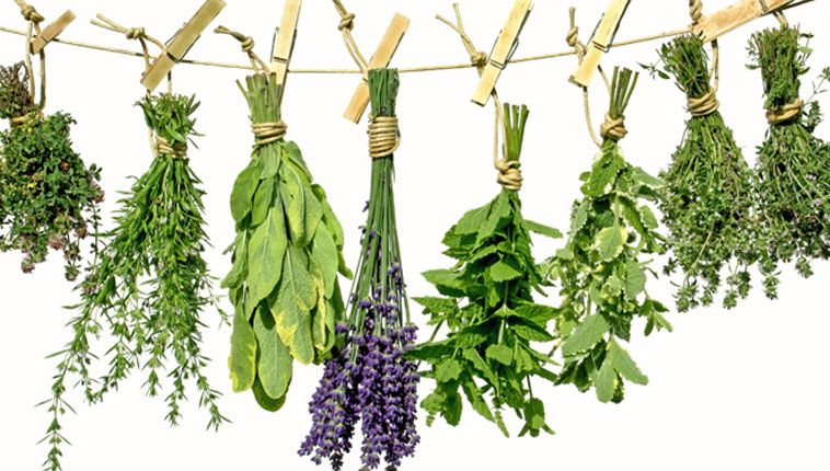 survive summer with these 5 herbal remedies - charlottes book, Skeleton